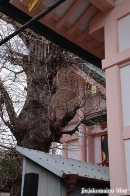 新小岩天祖神社(葛飾区東新小岩)9
