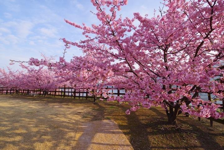 上関城山歴史公園①
