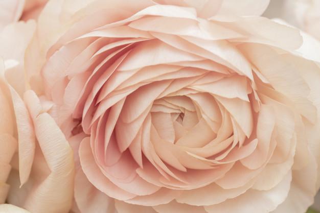 beautiful-delicate-pink-flower_73152-2060.jpg
