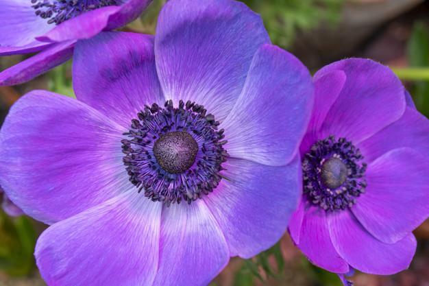 beautiful-purple-flower_73152-2052.jpg