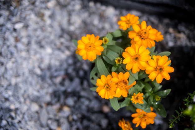 closeup-flower_71790-337.jpg