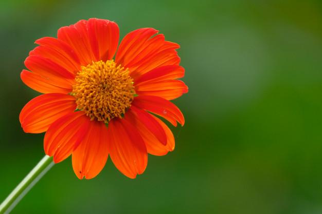 color-detail-orange-flower_41629-251.jpg