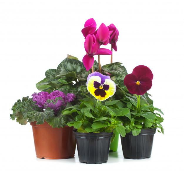 group-seedlings_87414-3642.jpg
