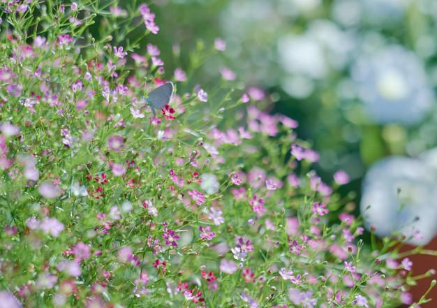 little-flower-blooming-spring-season_83782-495.jpg