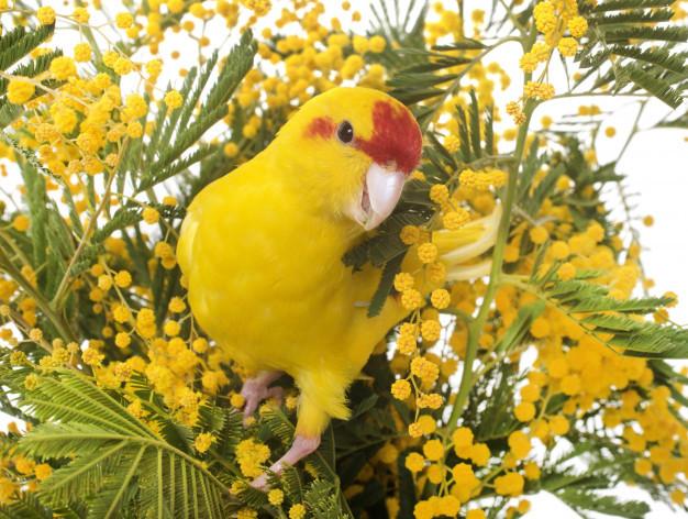 new-zealand-parakeets_87557-3287.jpg