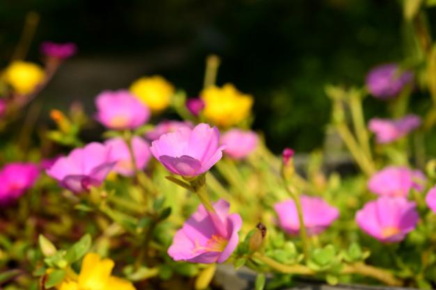 pink-white-flower_34433-576.jpg