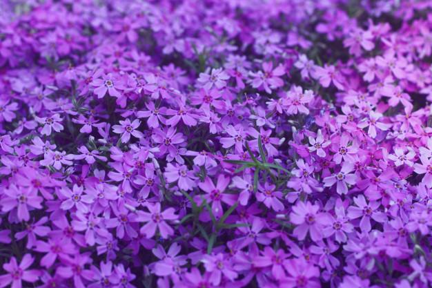 proton-purple-flowers-modern-design-backdrop_102894-48.jpg