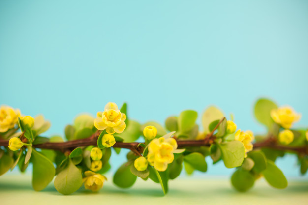 spring-blossoming-barberry-branch_70898-482.jpg