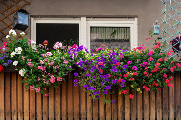 view-balcony-decorated-with-multicolored-beautiful-geraniums_94065-265.jpg