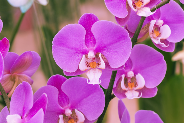 violet-petals-flowers_23-2148060192.jpg