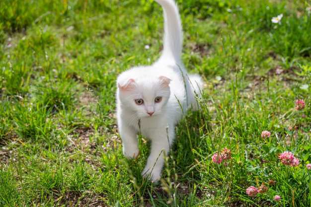 white-kitten-grass_78621-129.jpg