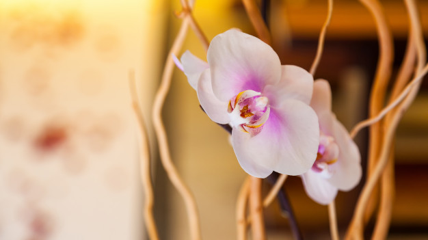 white-orchid-with-decorations_87414-939.jpg