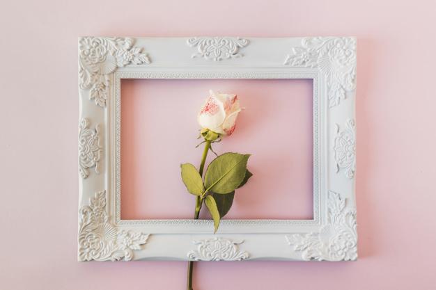 white-vintage-photo-frame-and-fresh-flower_23-2148031466.jpg