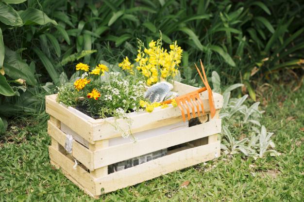 yellow-blooms-and-garden-equipment-in-wooden-box_23-2148028838.jpg