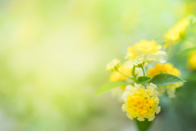 yellow-flower-with-copy-space-using-as-background-wallpaper-nature-concept_103077-24.jpg