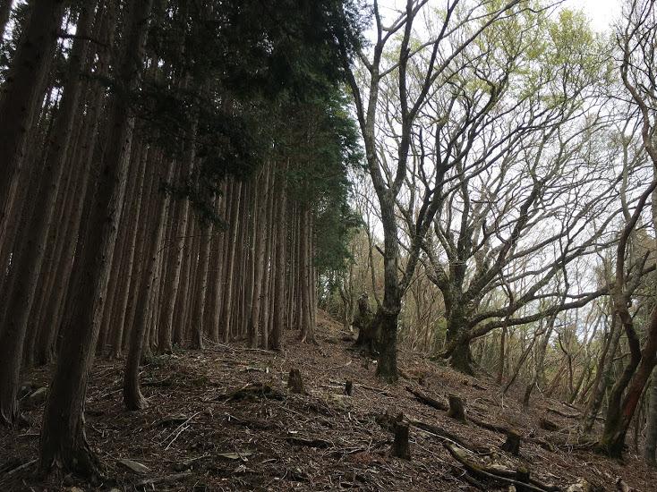 2019大峠山/登山道始め