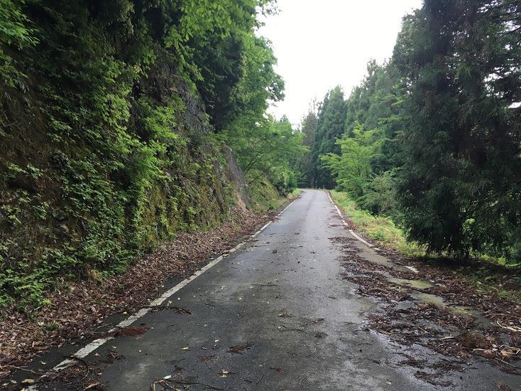 2019峰床山/舗装林道