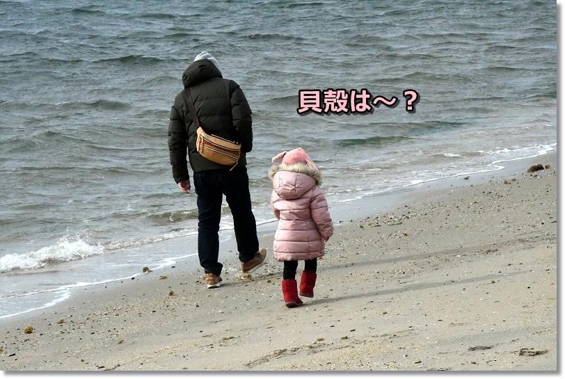 DSC_2144貝殻は~ ないね~