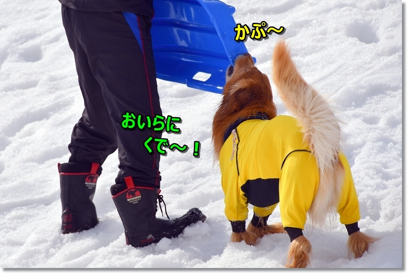 DSC_3022かぷ~