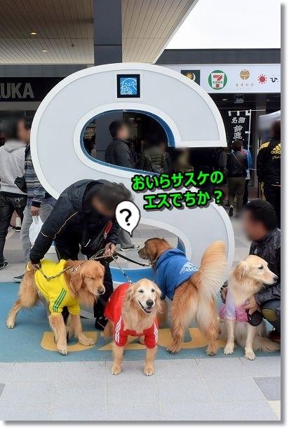DSC_5544おいらのエス