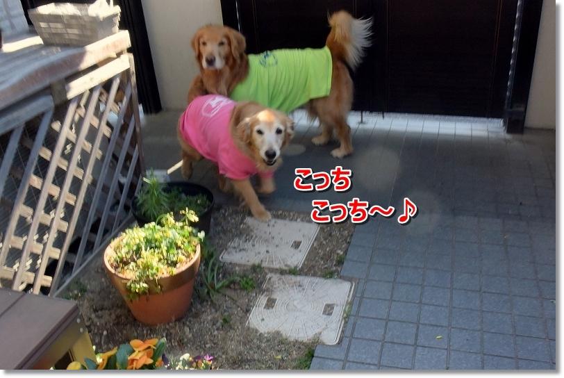 DSC_5892こっちこっち~
