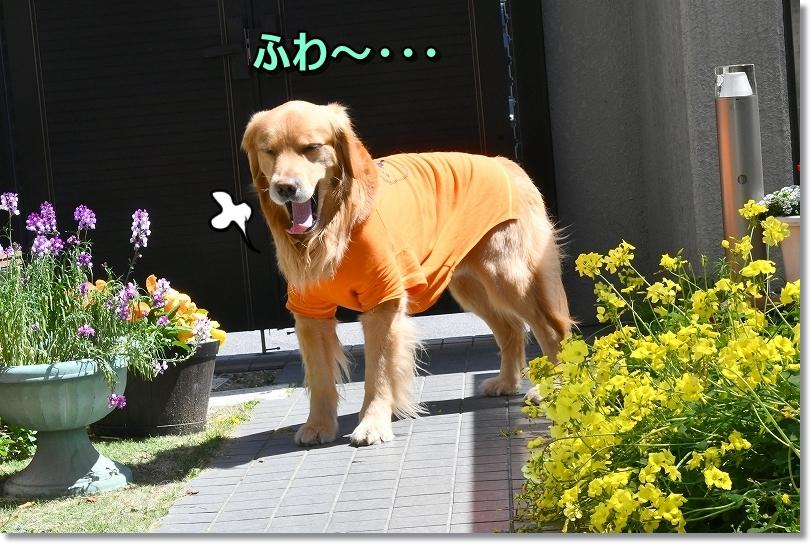 DSC_4048ふわ~