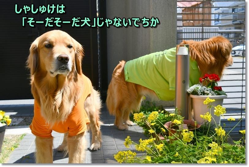 DSC_4059うしょら~