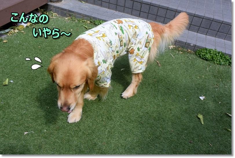 DSC_6073え~ぼくちんパッツンtukurinaosi