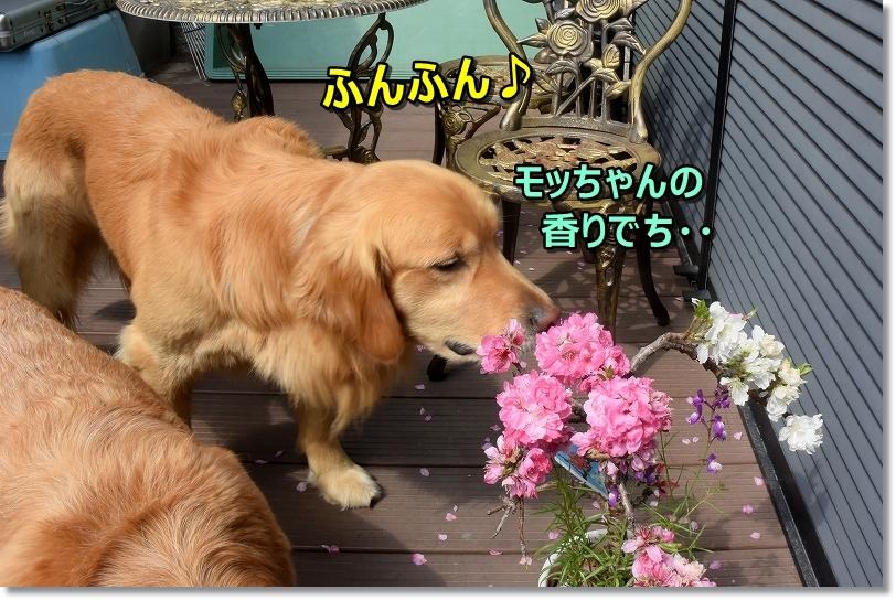 DSC_6082くんくん