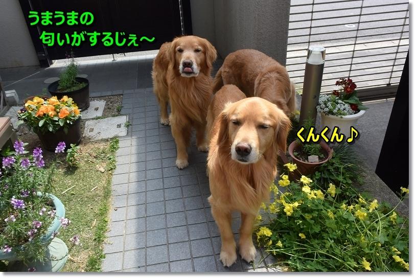 DSC_6045くんくん♪