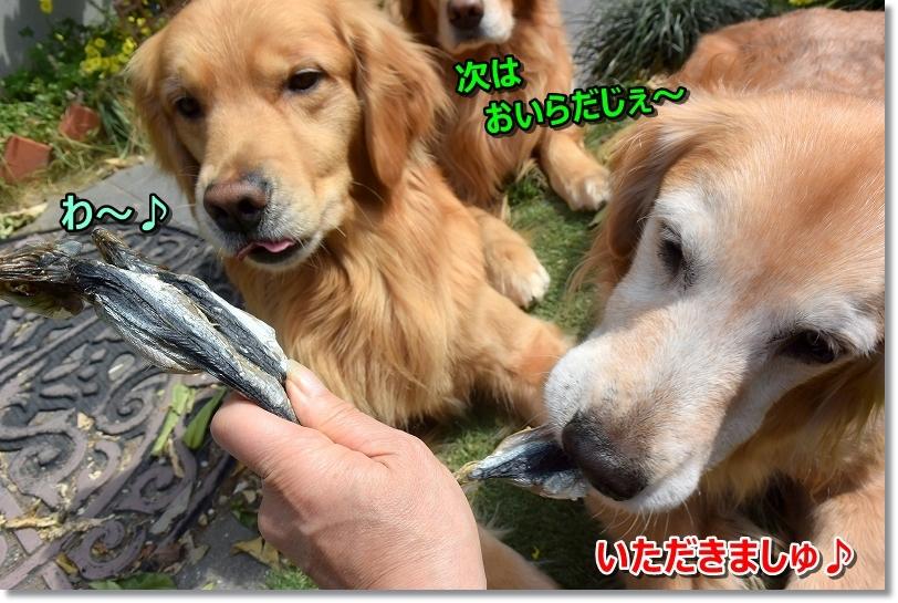 DSC_6054ぱっくん わ~