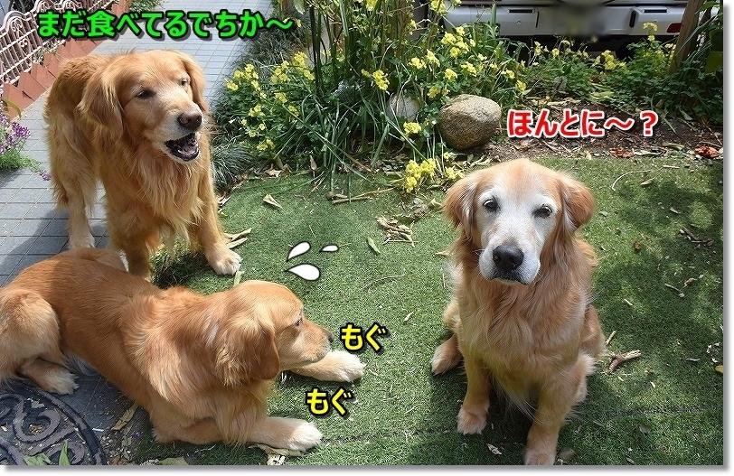 DSC_6059ずるいじぇ~ 違いましゅ
