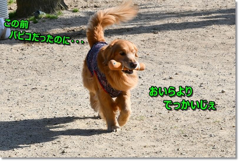 DSC_4107茶々丸でっかくなったでち(-_-;)