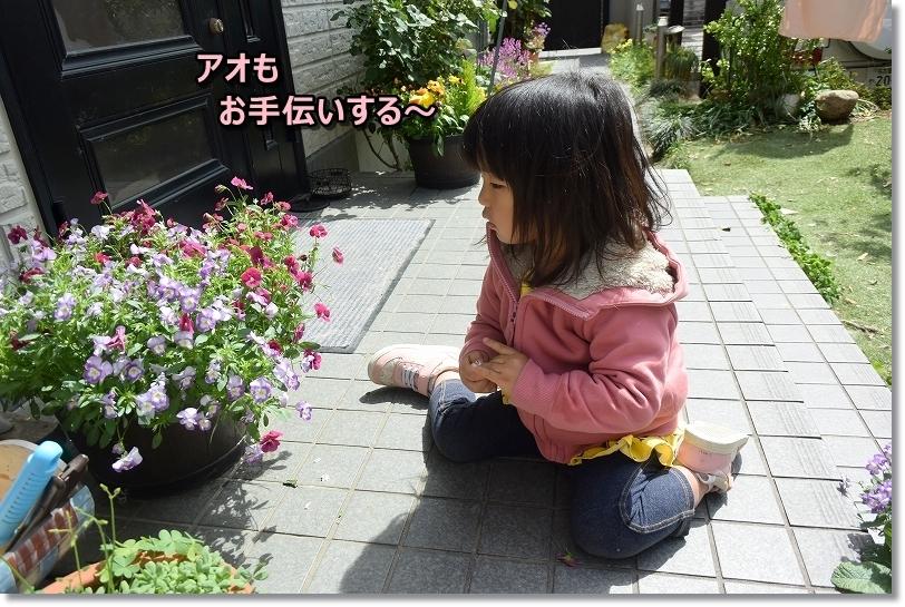 DSC_6464お手伝いする~