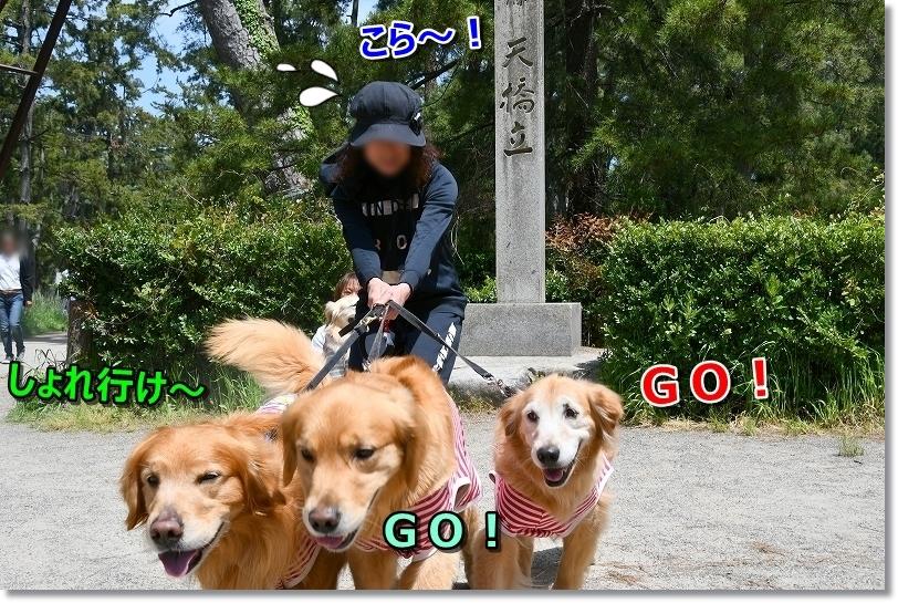 DSC_5213しょれいけgogo