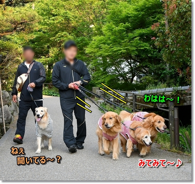DSC_5301優雅にお散歩するでしゅよ