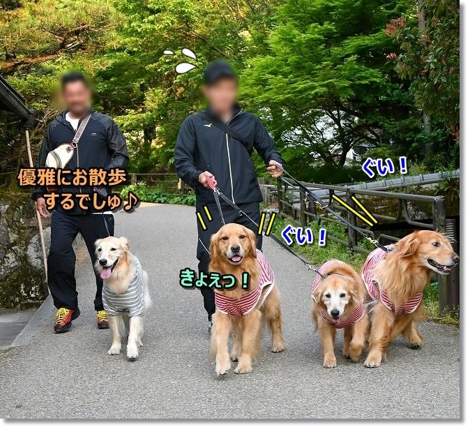 DSC_5302hきょっ