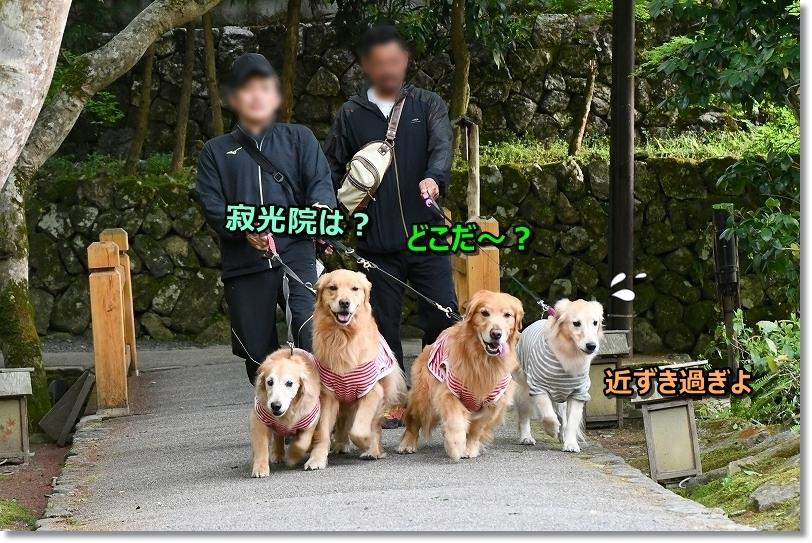 DSC_5361おさんぽっぽ~