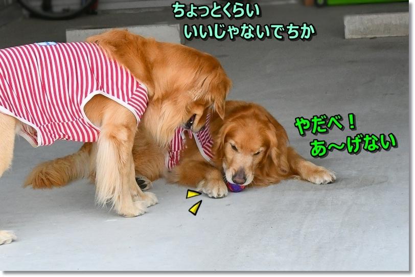 DSC_5481あ~げない