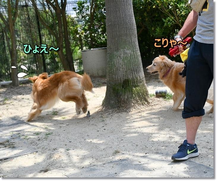 DSC_5917ひょえ~!