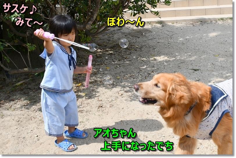 DSC_6044サスケ~