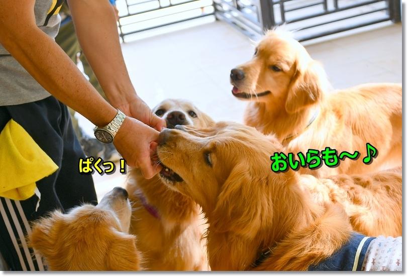 DSC_6089ぱくっ