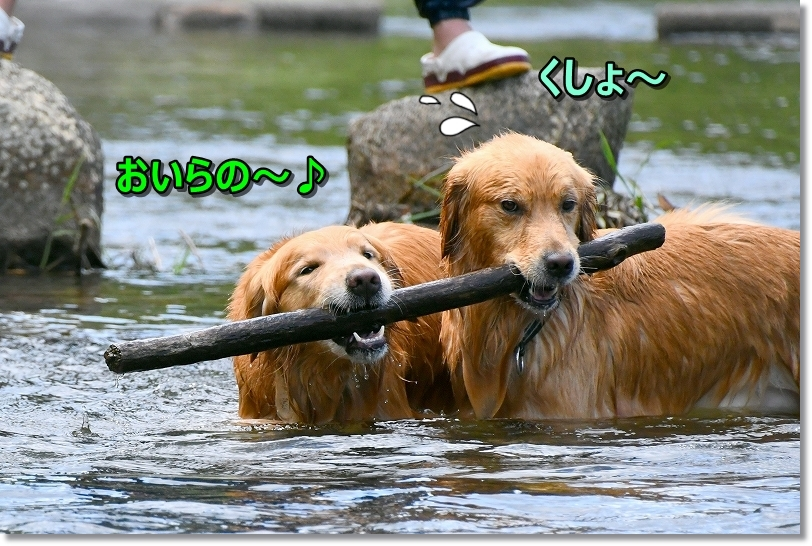 DSC_5680アゴの力は犬一倍強いのら