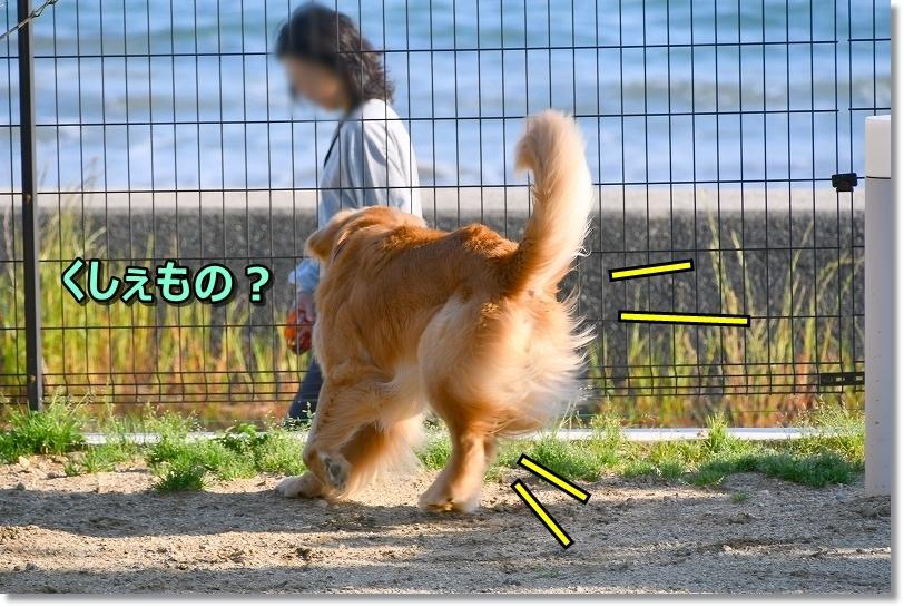 DSC_5608ラコーダ番犬でち