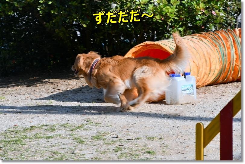 DSC_5612ズダダ
