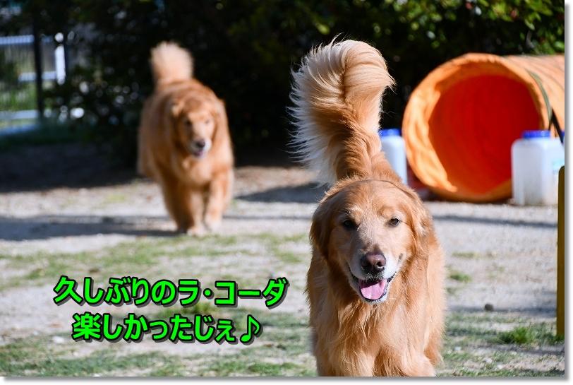 DSC_5618-1サスケ