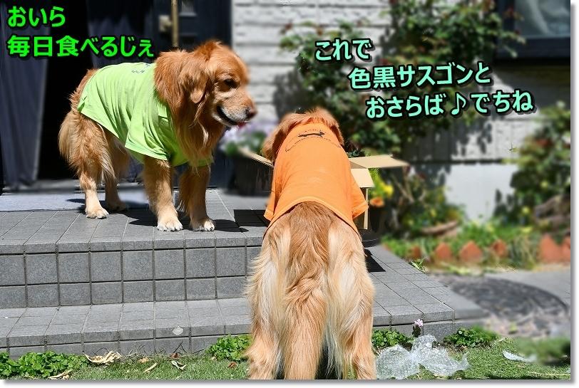 DSC_4089_201904171143590d6.jpg