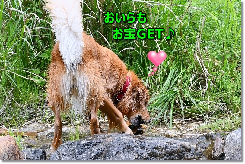 DSC_5699_20190614130324d4c.jpg