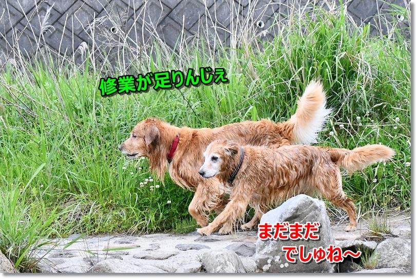 DSC_5741_2019061413033671c.jpg