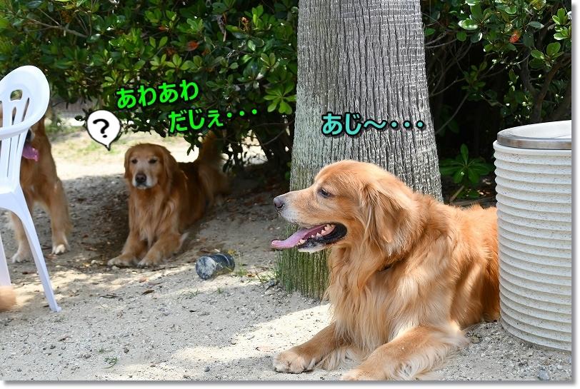 DSC_5888_20190605193245d50.jpg